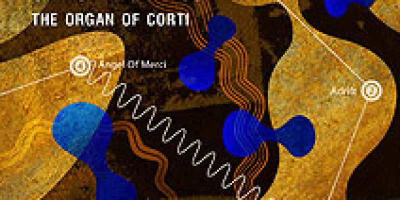 THE ORGAN OF CORTI - New Dave Formula and Christine Hanson Album features Michael Marra