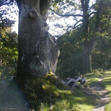 "Niel Gow's Fiddle TreeNiel Gow's Fiddle Tree at Inver near Dunkeld in Perthshire. The bench at the base of the tree is inscribed with the lyrics from Michael Marra's ""Niel Gow's Apprentice""  - ""Sit beneath the fiddle tree with the ghost of Niel Gow next to me"""